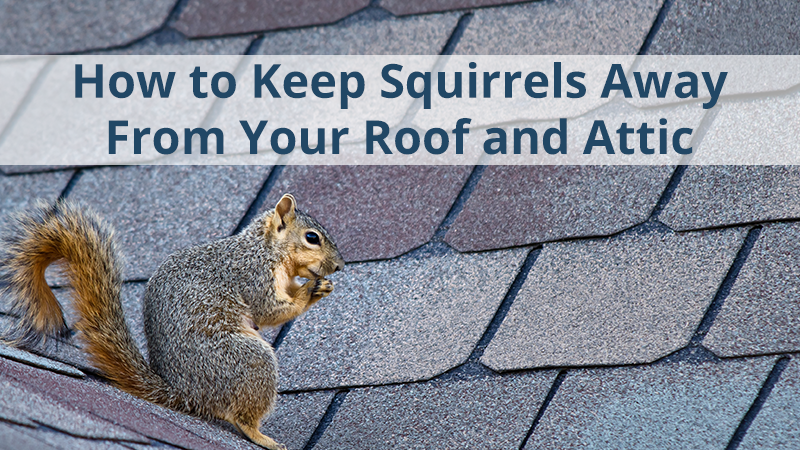 How To Keep Squirrels Away From Your Roof And Attic